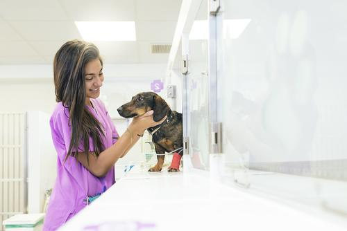 young veterinary assistant lady is taking care of a dog
