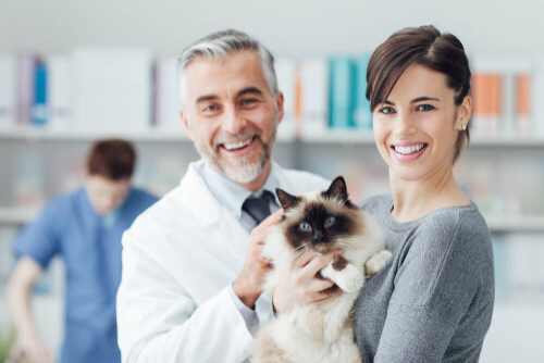 a cat that was helped, a veterinarian and a happy cat owner